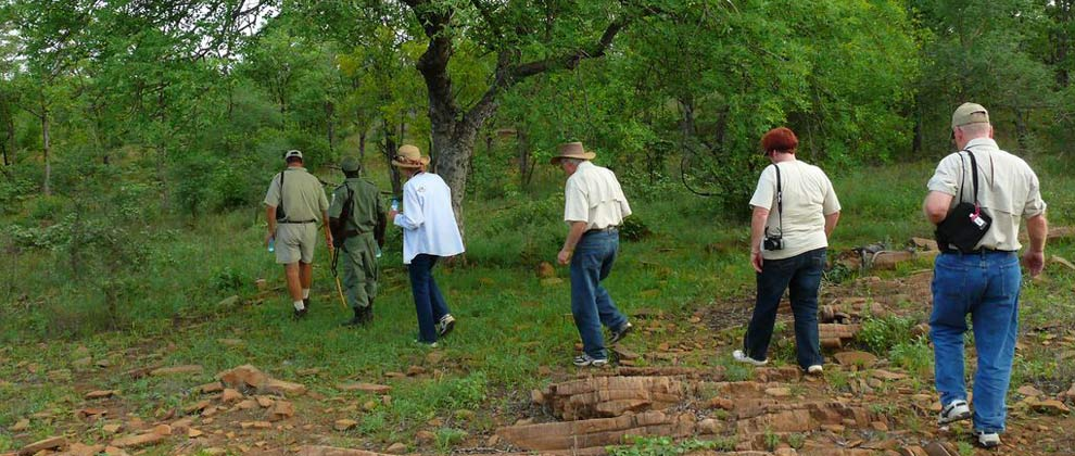 Guided safari walk at Limpopo National Park