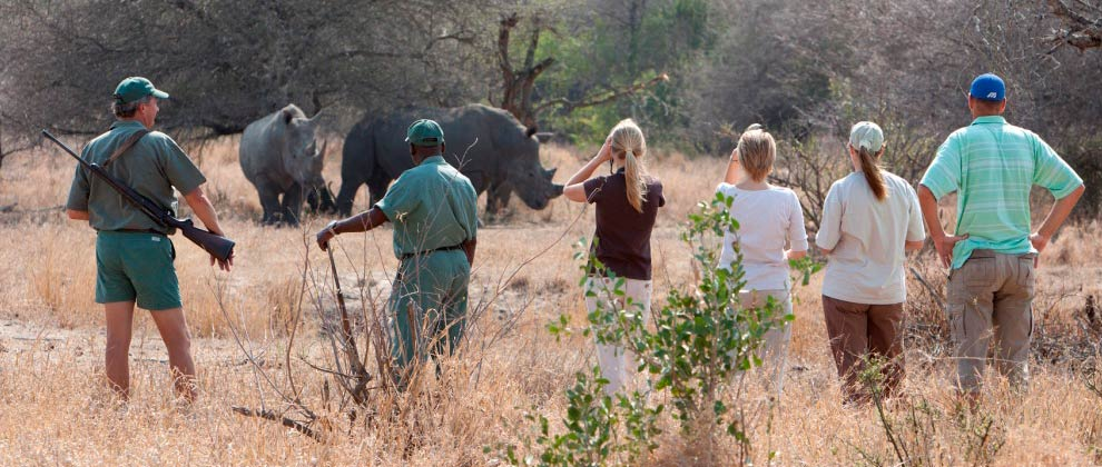 Viewing a rhino on a foot safari at Kruger National Park