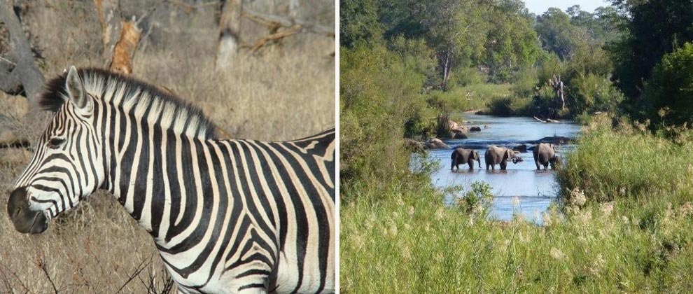 Sightings on safari in Kruger national park
