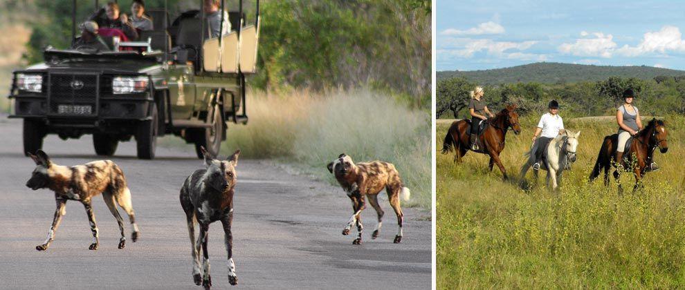 Vehicle and horseback safari at Kwamadwala