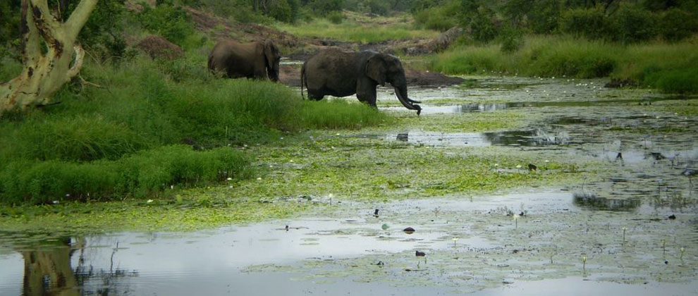 Elephants seen on safari at Limpopo National Park