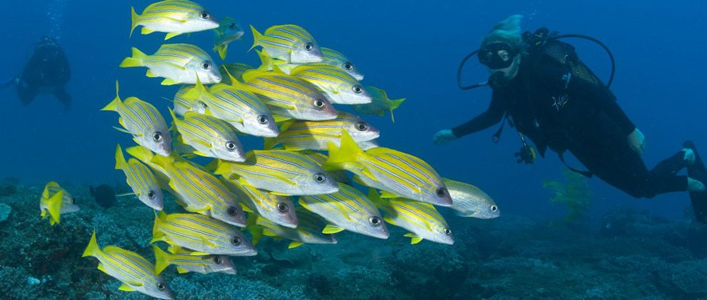 School of snappers seen on a dive at Rocktail Beach camp