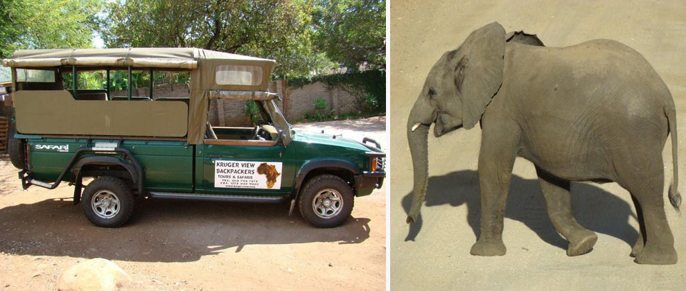 Safari vehicle and elephant