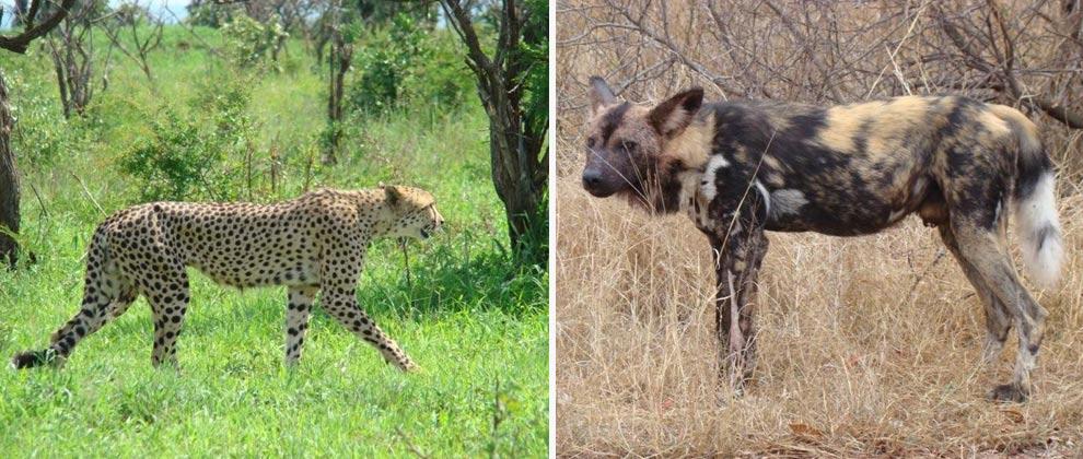 Wildlife seen on safari in Kruger National Park