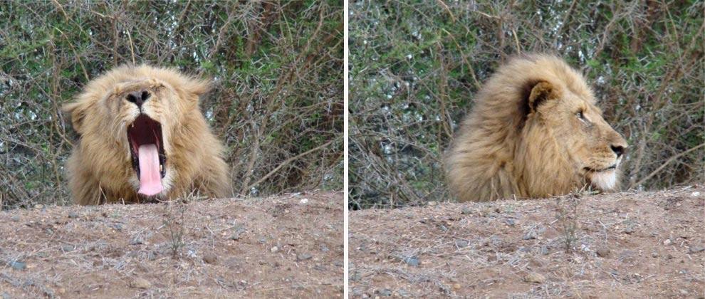 Wildlife seen on safari at Kruger National Park