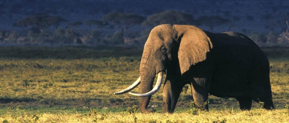 Elephant seen on safari