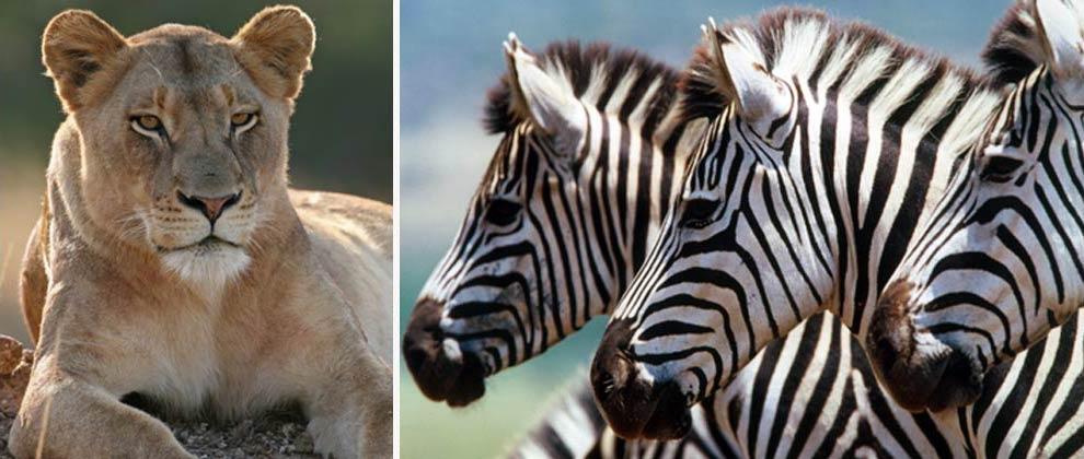 Animals seen on safari