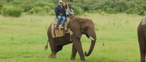 Elephant back walking safari