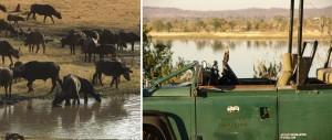 Safari at the Stanley and Livingstone