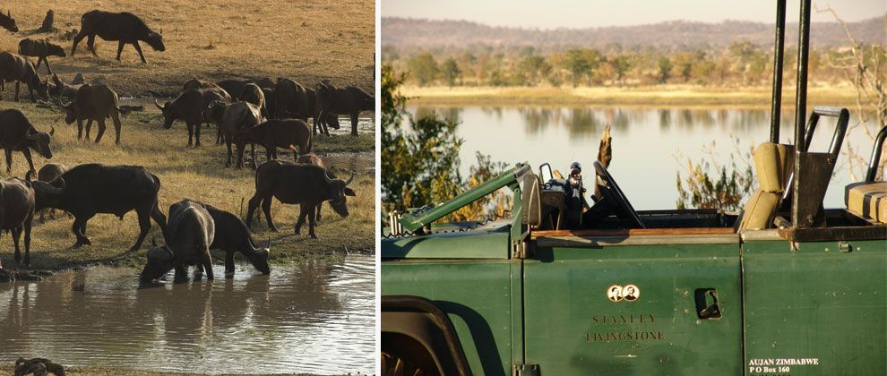 Safari at the Stanley and Livingstone