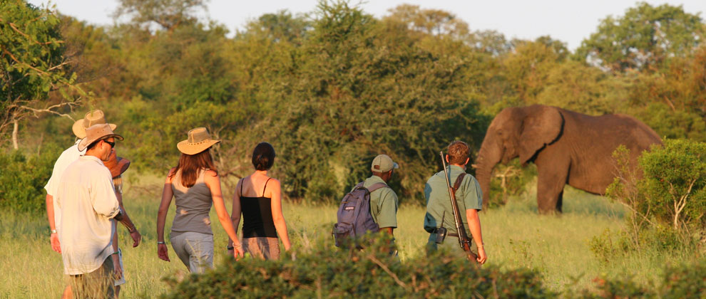 Guided walking safari in Kruger national park