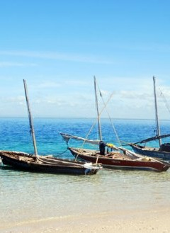 Dhow sailing boats in the Quirimbas Archipelago