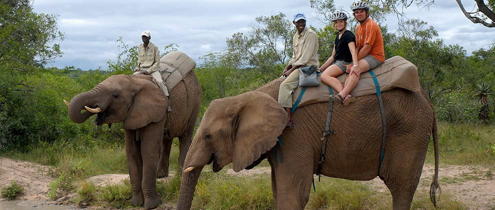 Elephant safari at Kwa Madwala