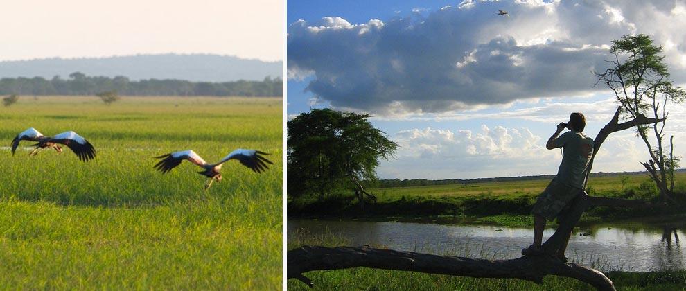 Birds seen in Gorongosa National Park