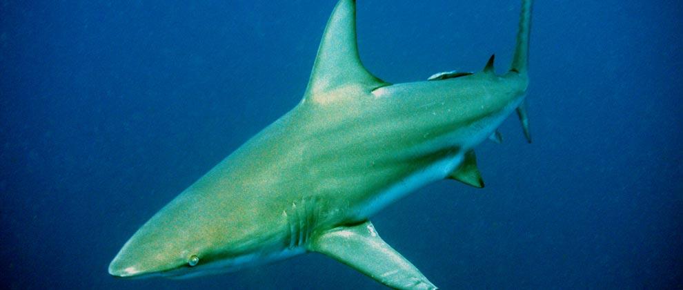 Close up shot of a shark