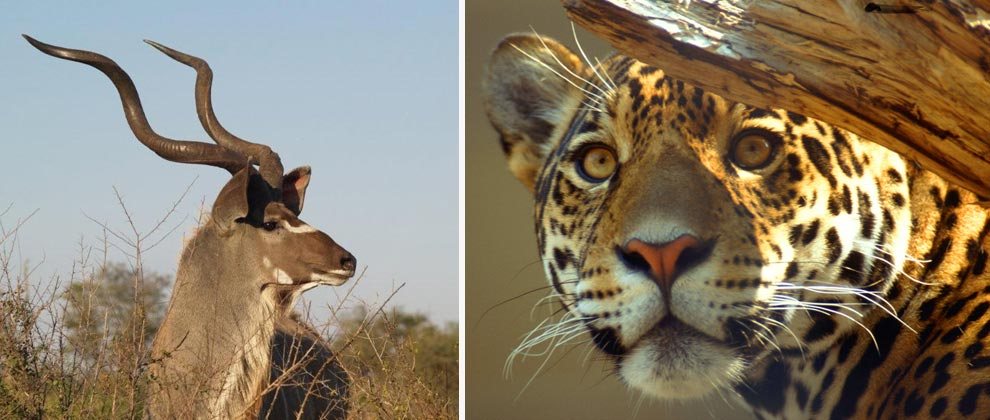 Sightings on safari in Kruger National park