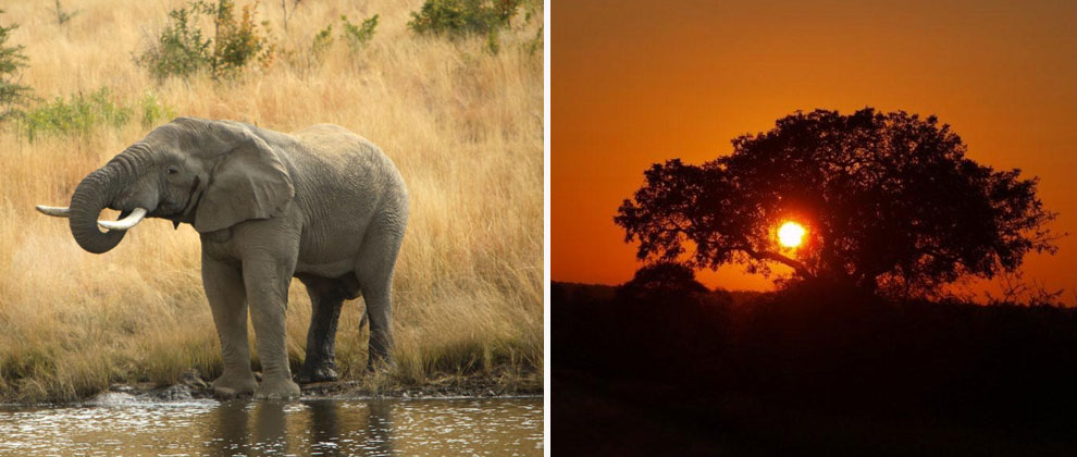 Elephant and sunset at Kruger Park