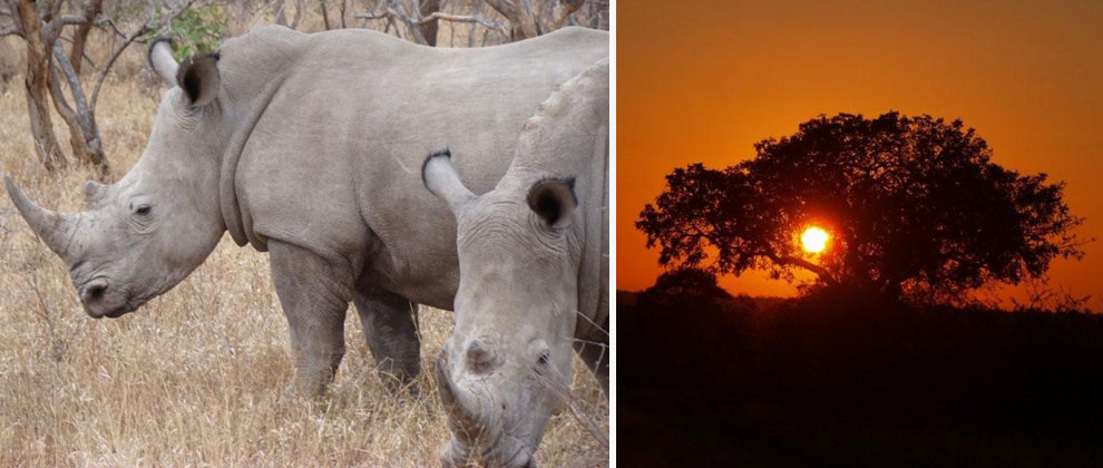 Kruger safari sightings and sunset