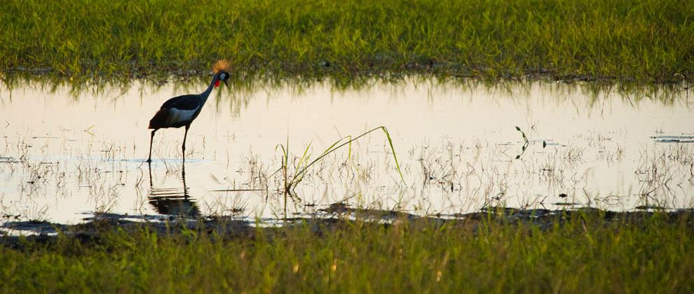 Birding at Gorongosa National Park