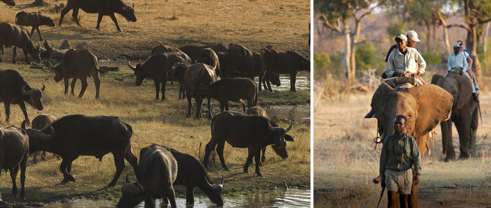 Sightings on safari at Victoria Falls