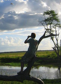 Bird watching in Gorongosa National Park