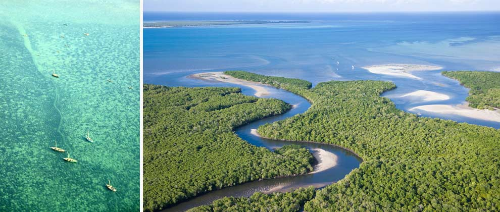 Aerial view of the mangroves on Ibo Island