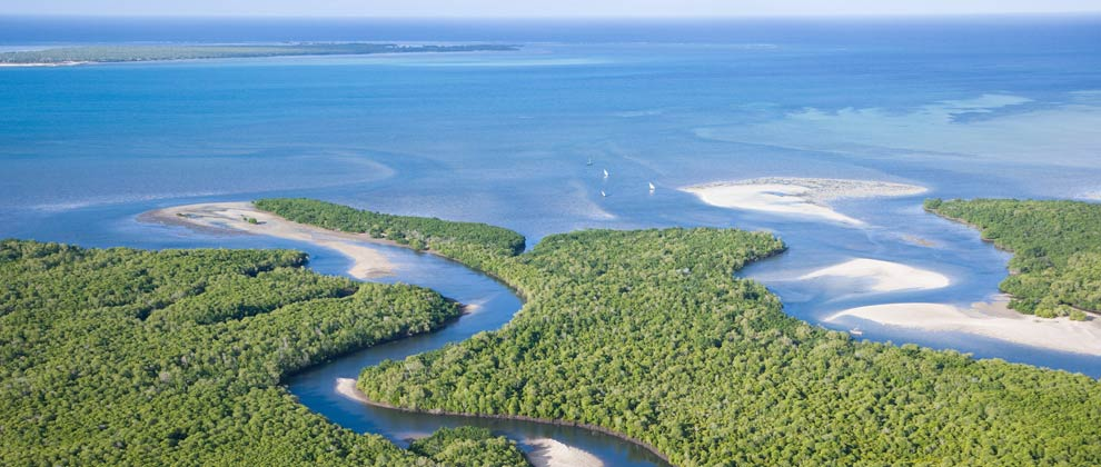 Aerial perspective of mangroves on Ibo island