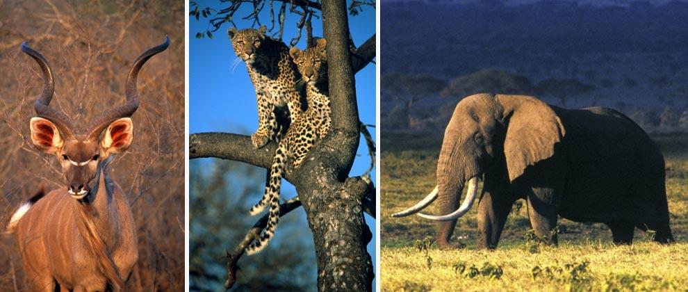 Animals seen on safari at Exeter Lodge