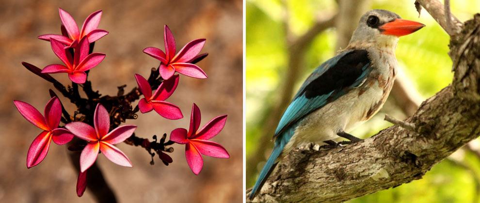 Fauna and flora in the Quirimbas Archipelago