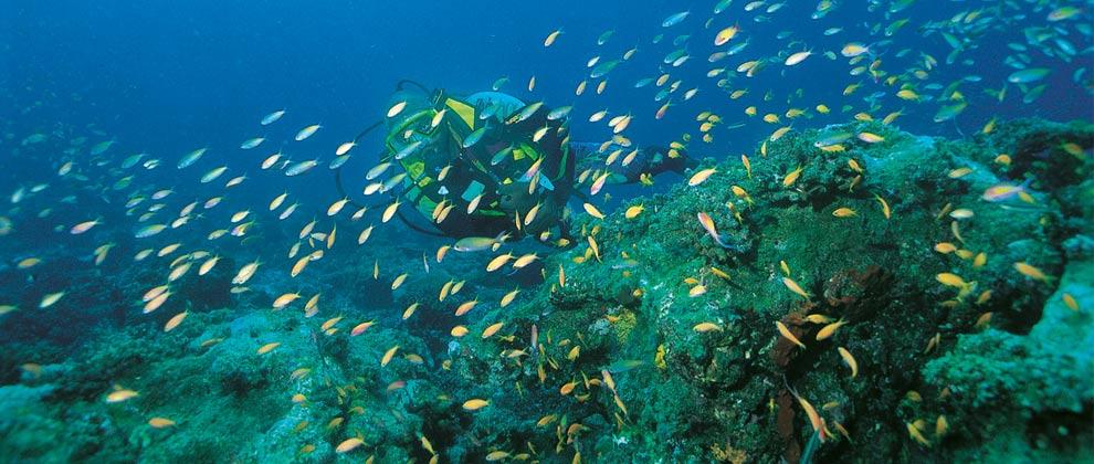 scuba diving in the Quirimbas Archipelago